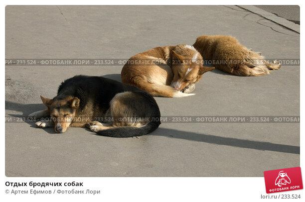 Отдых бродячих собак, фото № 233524, снято 26 марта 2008 г. (c) Артем Ефимов / Фотобанк Лори