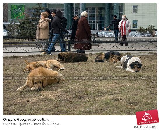 Купить «Отдых бродячих собак», фото № 235840, снято 28 марта 2008 г. (c) Артем Ефимов / Фотобанк Лори