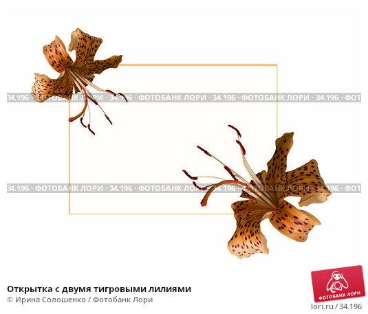 Купить «Открытка с двумя тигровыми лилиями», фото № 34196, снято 25 апреля 2018 г. (c) Ирина Солошенко / Фотобанк Лори