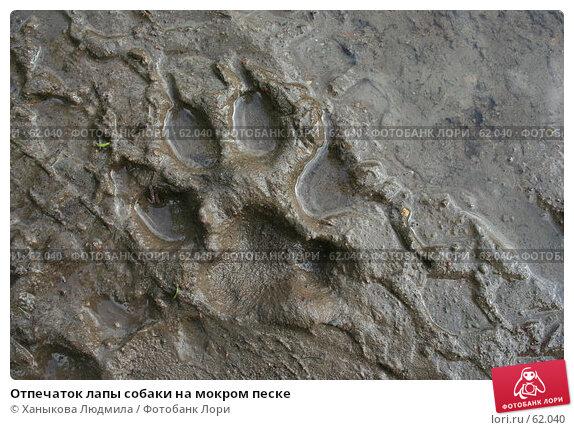 Отпечаток лапы собаки на мокром песке, фото № 62040, снято 15 июля 2007 г. (c) Ханыкова Людмила / Фотобанк Лори