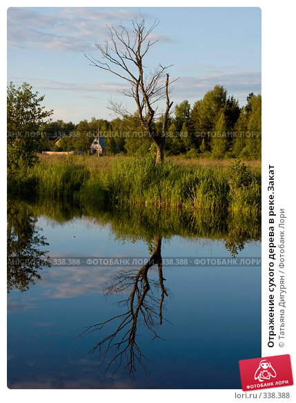 Отражение сухого дерева в реке.Закат, фото № 338388, снято 27 июня 2008 г. (c) Татьяна Дигурян / Фотобанк Лори
