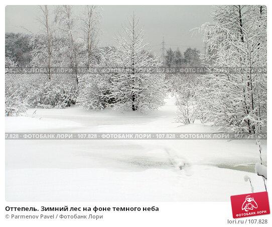 Купить «Оттепель. Зимний лес на фоне темного неба», фото № 107828, снято 15 февраля 2007 г. (c) Parmenov Pavel / Фотобанк Лори
