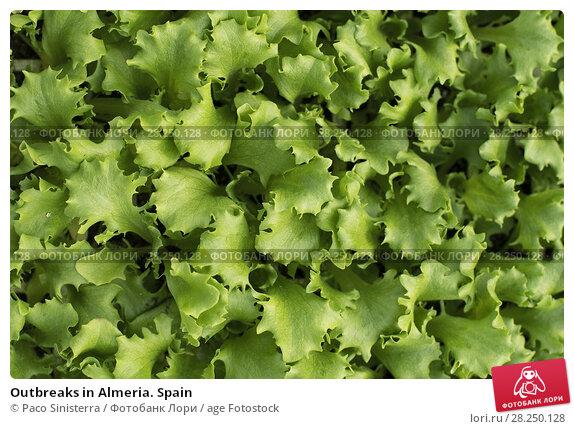 Купить «Outbreaks in Almeria. Spain», фото № 28250128, снято 3 января 2018 г. (c) age Fotostock / Фотобанк Лори