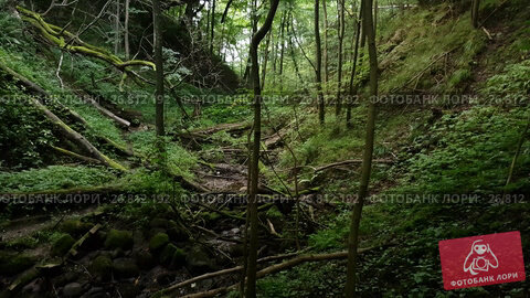 Купить «Overgrowth ravine in the forest», видеоролик № 26812192, снято 27 августа 2017 г. (c) Антон Гвоздиков / Фотобанк Лори