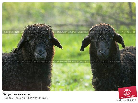 Овца с ягненком, фото № 298812, снято 2 мая 2008 г. (c) Артем Ефимов / Фотобанк Лори