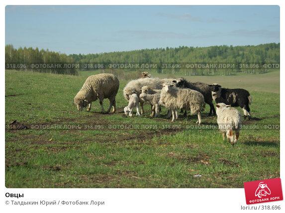 Овцы, фото № 318696, снято 24 мая 2008 г. (c) Талдыкин Юрий / Фотобанк Лори