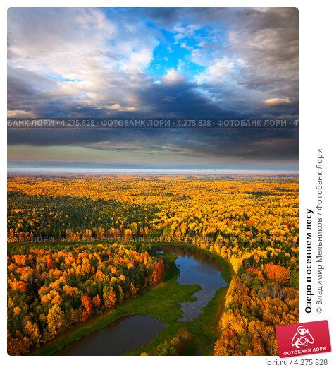 Купить «Озеро в осеннем лесу», фото № 4275828, снято 8 сентября 2011 г. (c) Владимир Мельников / Фотобанк Лори