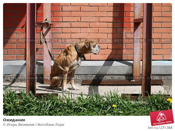 Ожидание, фото № 271384, снято 4 мая 2008 г. (c) Игорь Веснинов / Фотобанк Лори