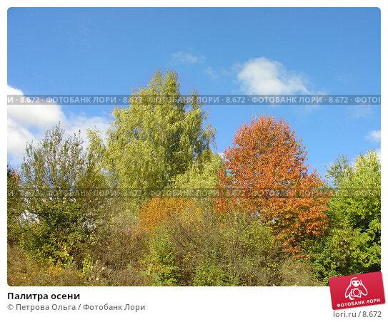 Палитра осени, фото № 8672, снято 6 октября 2005 г. (c) Петрова Ольга / Фотобанк Лори