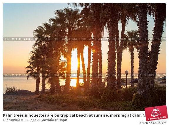 Купить «Palm trees silhouettes are on tropical beach at sunrise, morning at calm Mediterranean sea», фото № 33403396, снято 20 сентября 2010 г. (c) Кекяляйнен Андрей / Фотобанк Лори