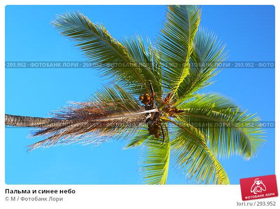 Пальма и синее небо, фото № 293952, снято 26 февраля 2017 г. (c) Михаил / Фотобанк Лори