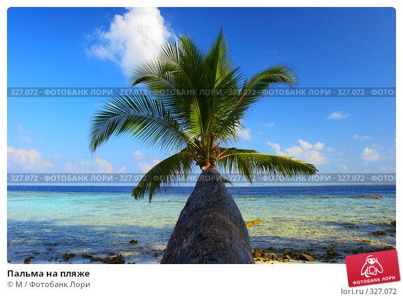 Купить «Пальма на пляже», фото № 327072, снято 11 декабря 2017 г. (c) М / Фотобанк Лори
