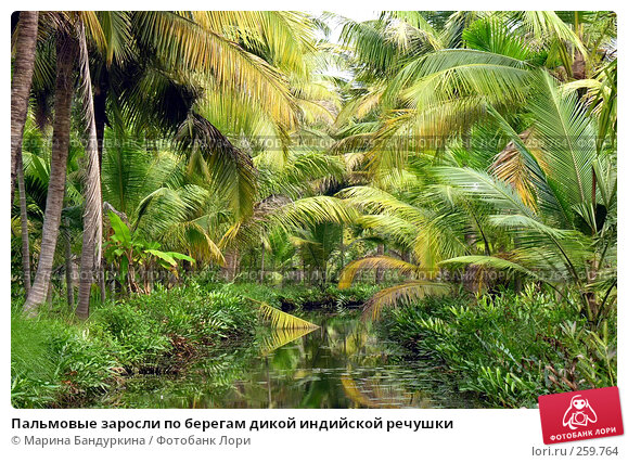 Пальмовые заросли по берегам дикой индийской речушки, фото № 259764, снято 20 ноября 2005 г. (c) Марина Бандуркина / Фотобанк Лори