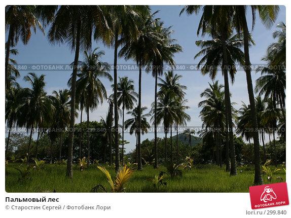 Купить «Пальмовый лес», фото № 299840, снято 24 марта 2008 г. (c) Старостин Сергей / Фотобанк Лори