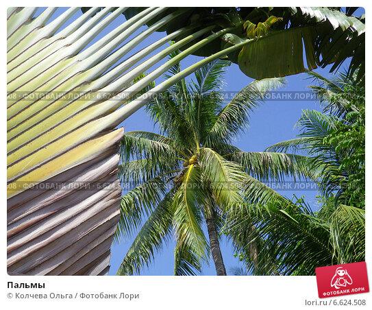 Купить «Пальмы», фото № 6624508, снято 21 февраля 2014 г. (c) Колчева Ольга / Фотобанк Лори