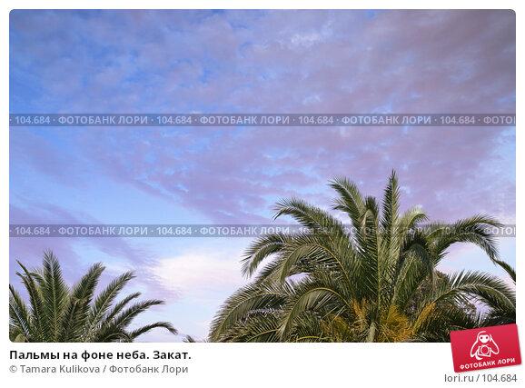 Купить «Пальмы на фоне неба. Закат.», фото № 104684, снято 22 апреля 2018 г. (c) Tamara Kulikova / Фотобанк Лори