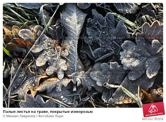 Палые листья на траве, покрытые изморозью, фото № 70512, снято 15 января 2006 г. (c) Михаил Лавренов / Фотобанк Лори