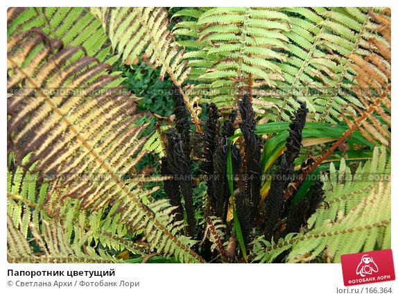 Папоротник цветущий, фото № 166364, снято 7 октября 2006 г. (c) Светлана Архи / Фотобанк Лори