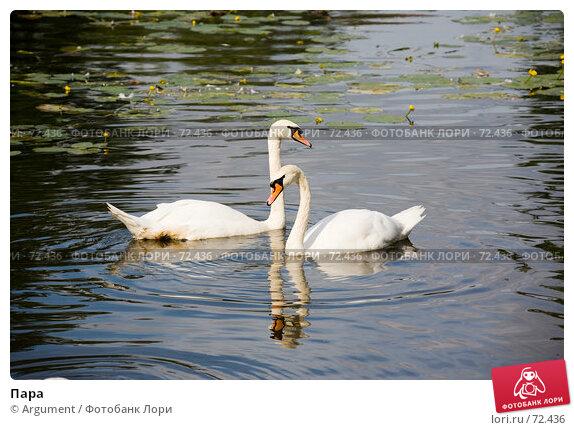 Пара, фото № 72436, снято 5 августа 2007 г. (c) Argument / Фотобанк Лори