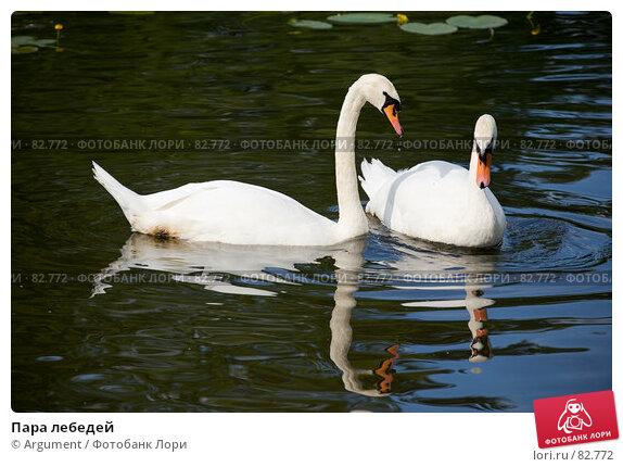 Купить «Пара лебедей», фото № 82772, снято 5 августа 2007 г. (c) Argument / Фотобанк Лори