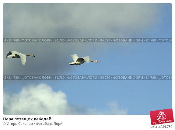 Пара летящих лебедей, фото № 84780, снято 22 февраля 2017 г. (c) Игорь Соколов / Фотобанк Лори