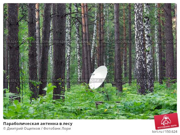 Параболическая антенна в лесу, фото № 150624, снято 19 июня 2007 г. (c) Дмитрий Ощепков / Фотобанк Лори