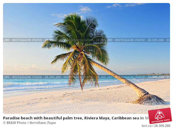 Купить «Paradise beach with beautiful palm tree, Riviera Maya, Caribbean sea in Mexico», фото № 28309280, снято 20 апреля 2018 г. (c) BE&W Photo / Фотобанк Лори