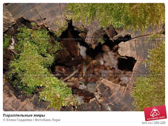 Купить «Параллельные миры», фото № 250220, снято 24 марта 2008 г. (c) Елена Гордеева / Фотобанк Лори