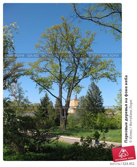Парковые деревья на фоне неба, фото № 324452, снято 17 мая 2008 г. (c) Морковкин Терентий / Фотобанк Лори