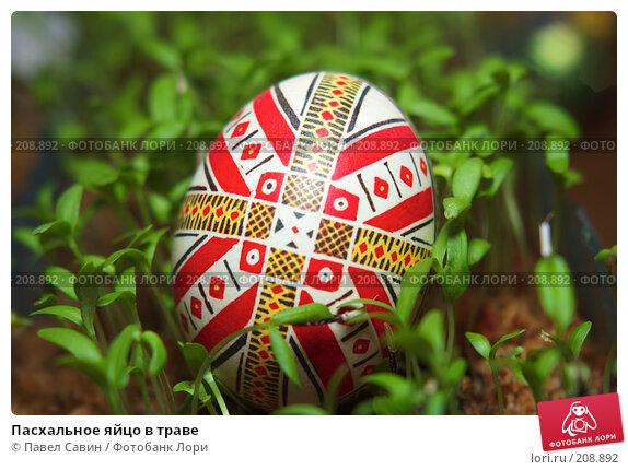 Пасхальное яйцо в траве, фото № 208892, снято 19 февраля 2008 г. (c) Павел Савин / Фотобанк Лори