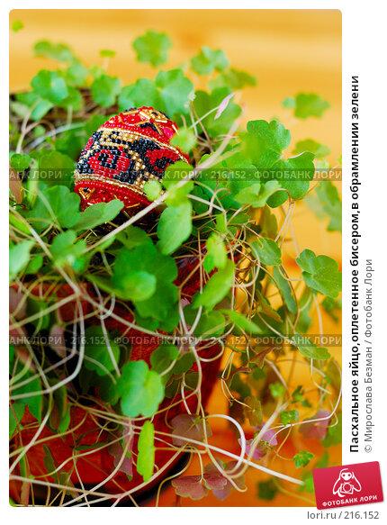 Пасхальное яйцо,оплетенное бисером,в обрамлении зелени, фото № 216152, снято 26 февраля 2008 г. (c) Мирослава Безман / Фотобанк Лори