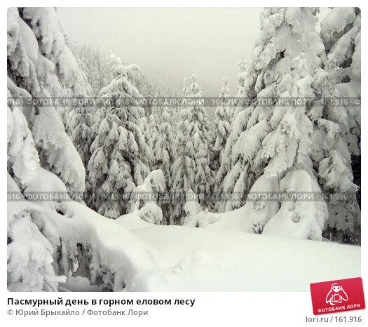 Купить «Пасмурный день в горном еловом лесу», фото № 161916, снято 4 января 2005 г. (c) Юрий Брыкайло / Фотобанк Лори