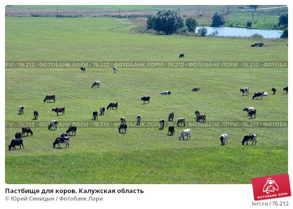 Пастбище для коров. Калужская область, фото № 76212, снято 11 августа 2007 г. (c) Юрий Синицын / Фотобанк Лори