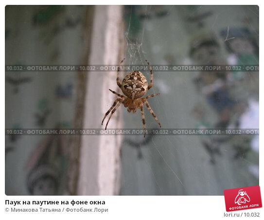 Паук на паутине на фоне окна, фото № 10032, снято 26 августа 2006 г. (c) Минакова Татьяна / Фотобанк Лори