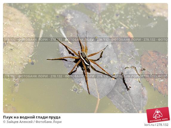 Паук на водной глади пруда, фото № 278132, снято 2 мая 2008 г. (c) Зайцев Алексей / Фотобанк Лори