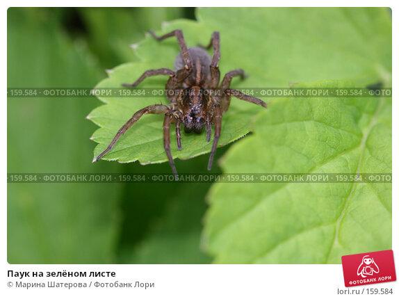 Паук на зелёном листе, фото № 159584, снято 2 июля 2007 г. (c) Марина Шатерова / Фотобанк Лори