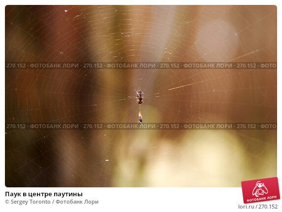 Паук в центре паутины, фото № 270152, снято 26 апреля 2008 г. (c) Sergey Toronto / Фотобанк Лори