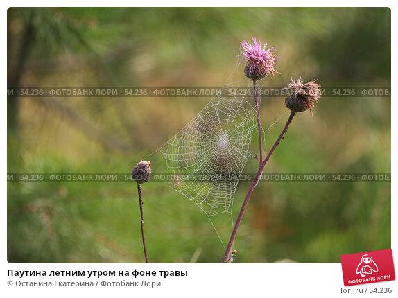 Паутина летним утром на фоне травы, фото № 54236, снято 5 августа 2006 г. (c) Останина Екатерина / Фотобанк Лори