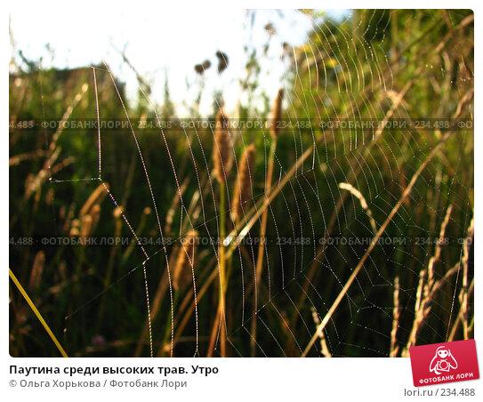Паутина среди высоких трав. Утро, фото № 234488, снято 8 августа 2007 г. (c) Ольга Хорькова / Фотобанк Лори