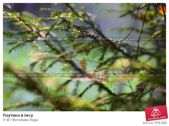 Паутина в лесу, фото № 319264, снято 26 мая 2017 г. (c) Михаил / Фотобанк Лори
