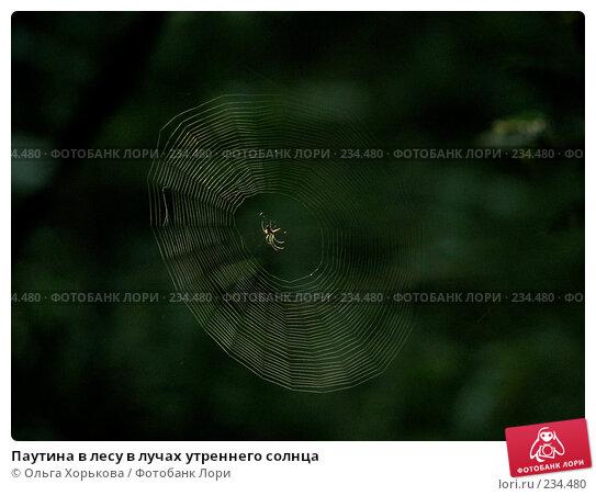 Паутина в лесу в лучах утреннего солнца, фото № 234480, снято 7 августа 2007 г. (c) Ольга Хорькова / Фотобанк Лори