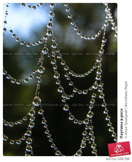 Купить «Паутина в росе», фото № 228700, снято 18 сентября 2005 г. (c) Илья Троицкий / Фотобанк Лори