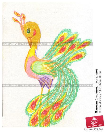 Павлин (рисунок пастелью), иллюстрация № 278660 (c) Василий Каргандюм / Фотобанк Лори