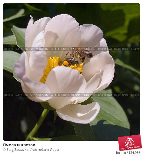 Пчела и цветок, фото № 134936, снято 11 июня 2004 г. (c) Serg Zastavkin / Фотобанк Лори