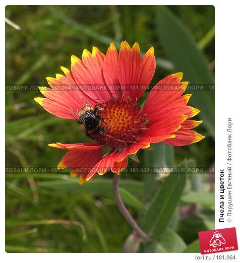 Пчела и цветок, фото № 181064, снято 25 февраля 2017 г. (c) Парушин Евгений / Фотобанк Лори
