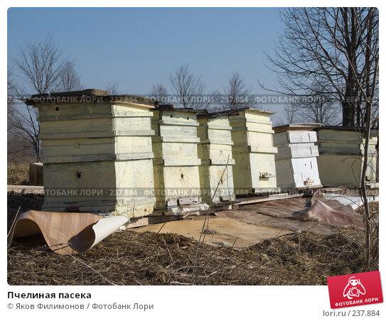 Пчелиная пасека, фото № 237884, снято 24 октября 2016 г. (c) Яков Филимонов / Фотобанк Лори
