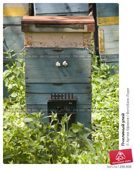 Пчелиный улей, фото № 298808, снято 3 мая 2008 г. (c) Артем Ефимов / Фотобанк Лори