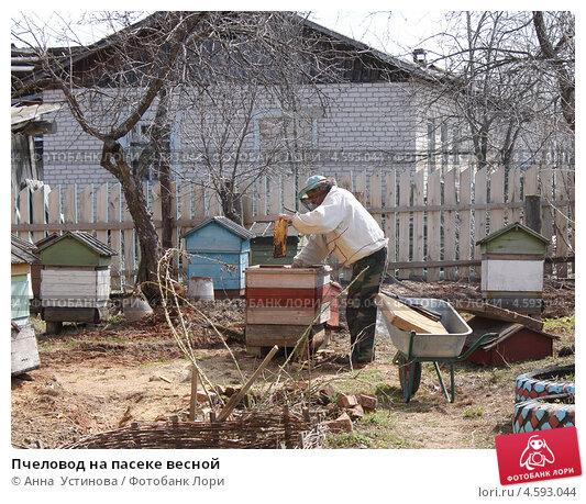 Пчеловод на пасеке весной (2013 год). Редакционное фото, фотограф Анна  Устинова / Фотобанк Лори