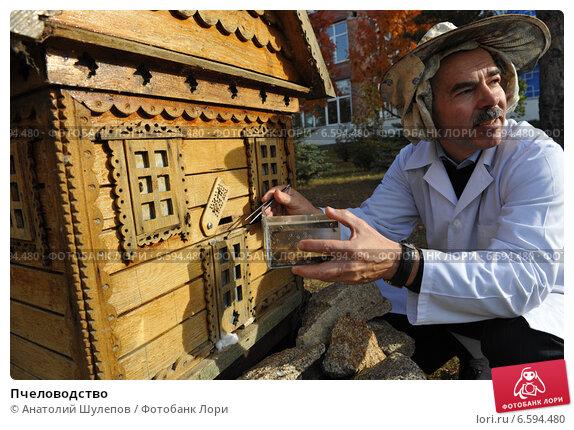 Пчеловодство (2010 год). Редакционное фото, фотограф Анатолий Шулепов / Фотобанк Лори