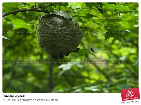 Пчелы и улей, фото № 65252, снято 21 июля 2007 г. (c) Леонид Селивёрстов / Фотобанк Лори